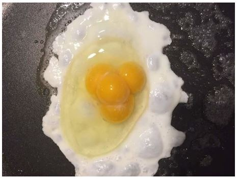 One Egg With Four Yolks | Source: Bored Panda