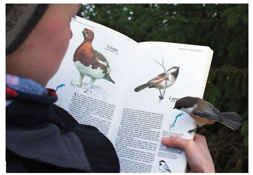 Bird That Lands on Page About Itself | Source: Bored Panda